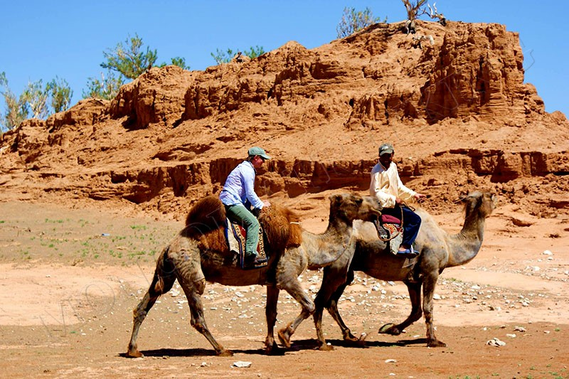 Ship of the desert - Gobi camel trekking tour