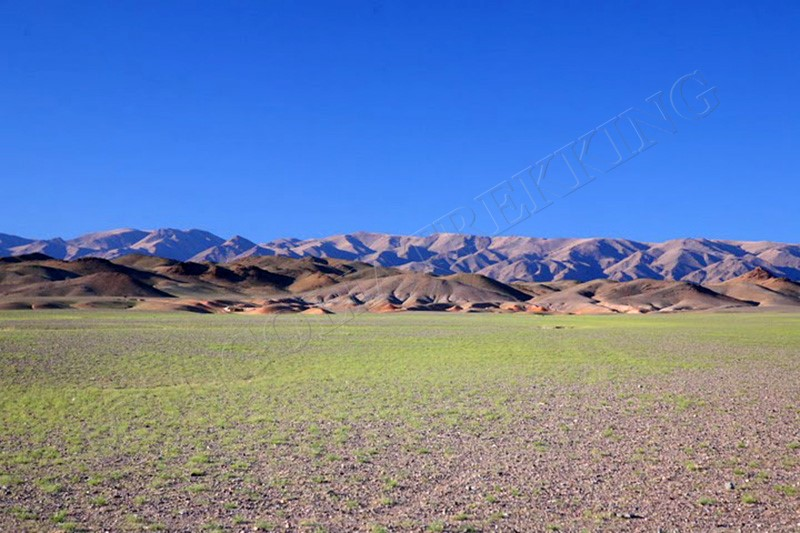 Gobi pasture - Gobi & Beyond jeep tour