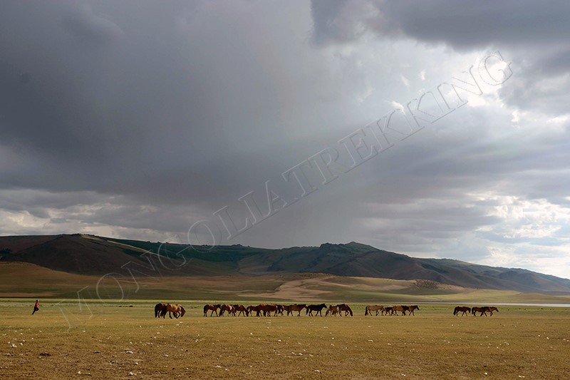 In grassland - Gobi & Beyond jeep tour