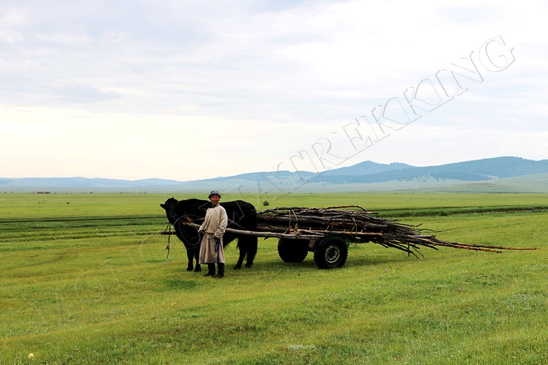 A herder pulling a cart laden with brushwood - Nomadic Mongolia bike tour