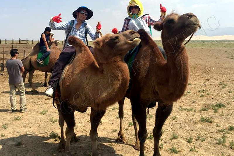 Camel riding - Gobi camel trekking tour